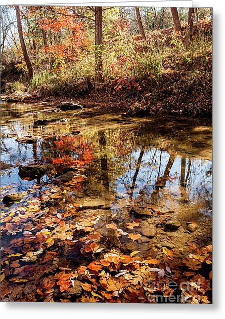 Greeting Card featuring the photograph Orange Leaves by Iris Greenwell