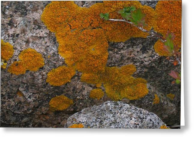 Greeting Card featuring the photograph Orange Lichen On Granite by Mary Bedy