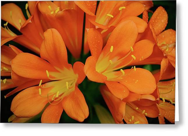 Orange Lilies No. 1-1 Greeting Card