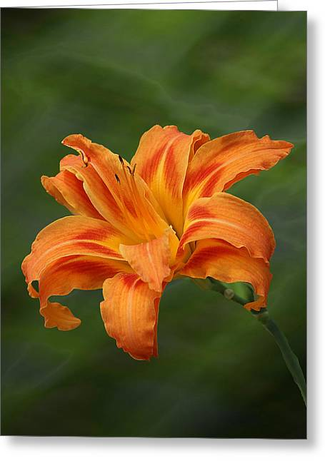 Orange Lilly Greeting Card by Rick Friedle