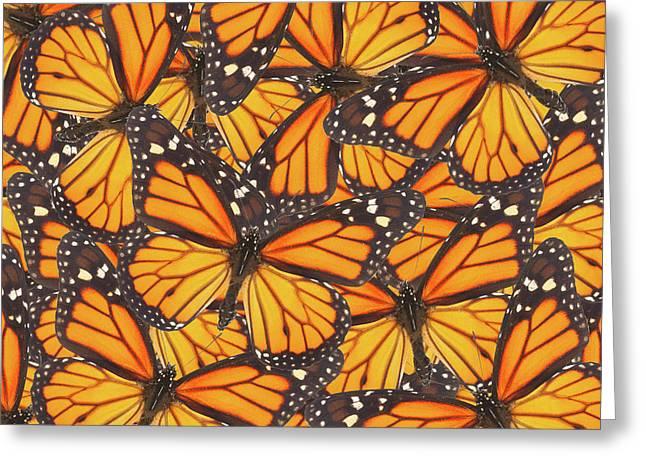 Orange Monarch  Butterfly Greeting Card by Anastasy Yarmolovich