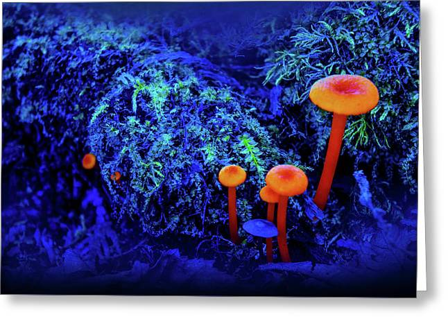 Orange Mushrooms Greeting Card by Art Spectrum