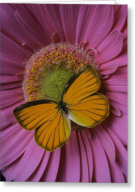 Orange On Pink Greeting Card