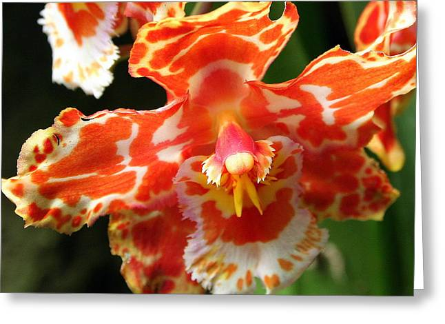 Orange Orchid Greeting Card by Laurel Talabere