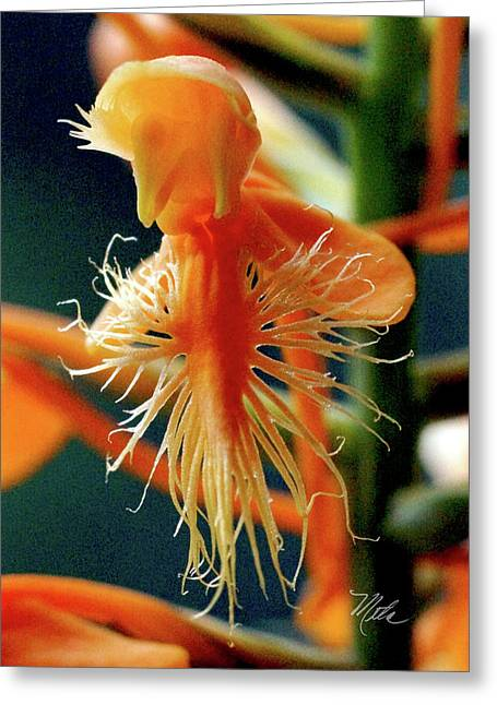 Fringed Orange Orchid Greeting Card