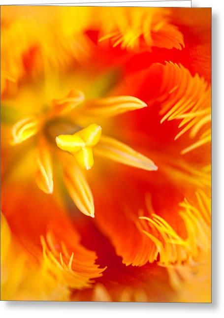 Orange Passion. Tulip Macro Greeting Card