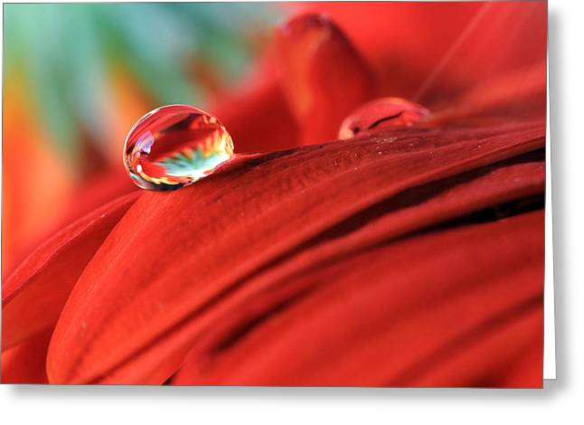 Orange Petals And Water Drops Greeting Card by Angela Murdock
