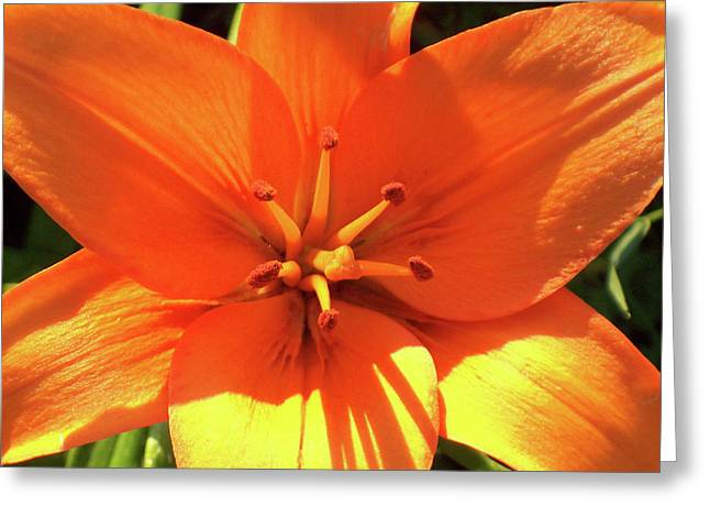 Greeting Card featuring the photograph Orange Pop by Cris Fulton