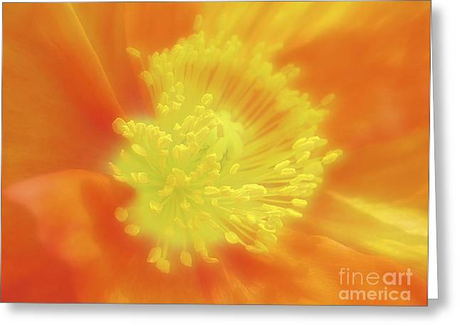 Orange Poppy Greeting Card by Addie Hocynec