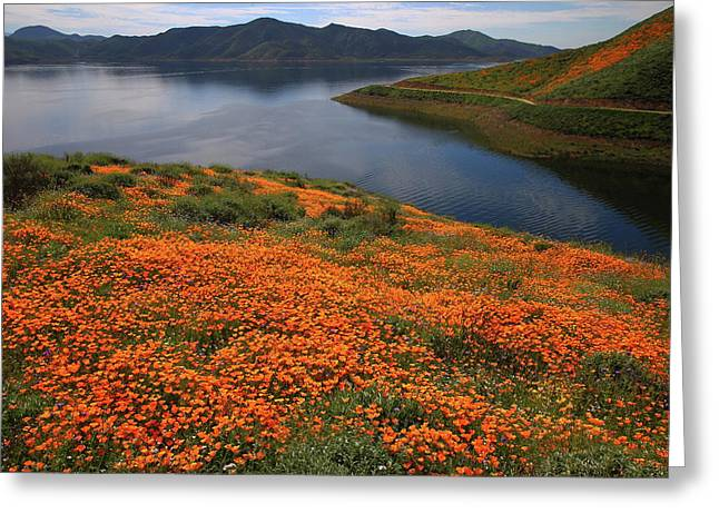 Greeting Card featuring the photograph Orange Poppy Fields At Diamond Lake In California by Jetson Nguyen