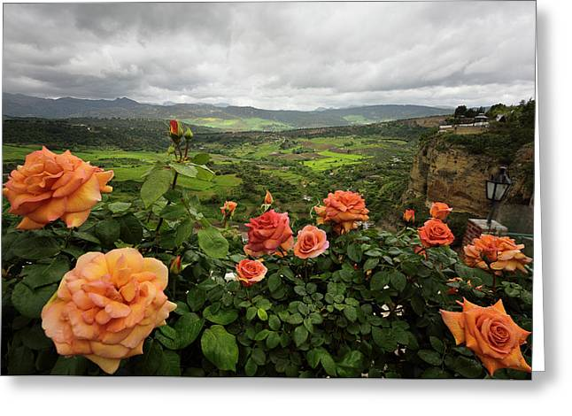 Orange Rose Bush In Spring Overlooking Green Farm Fields At El T Greeting Card