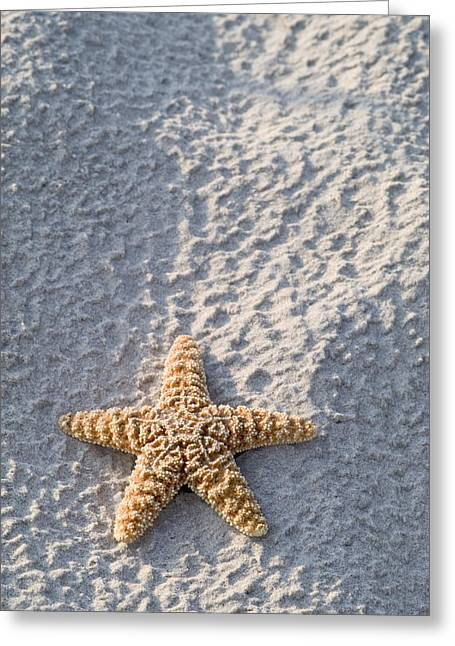 Orange Seastar Laying On Sand Greeting Card by Mary Van de Ven - Printscapes