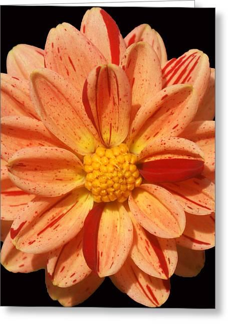 Orange Sherbert Greeting Card by Kat Dee