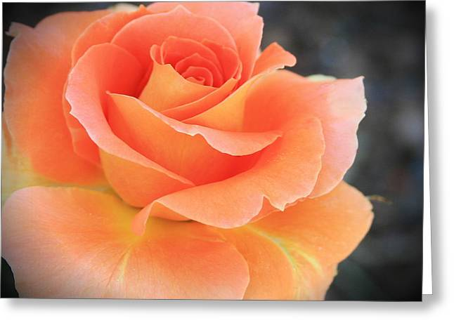 Orange Sherbert Greeting Card by Marna Edwards Flavell