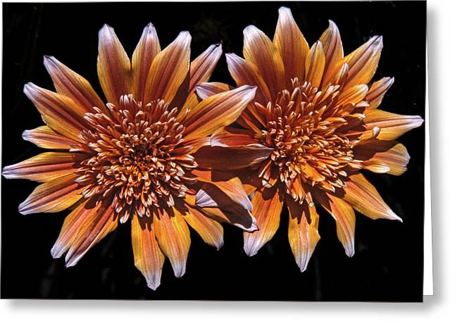 Orange South African Flowers Greeting Card