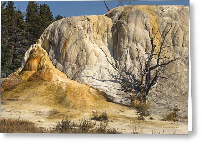 Orange Spring Mound Greeting Card by Loree Johnson