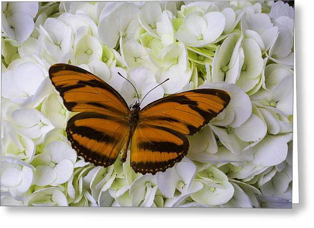 Orange Striped Butterfly Greeting Card by Garry Gay