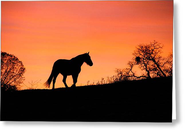 Orange Sunrise Greeting Card by Stephanie Laird