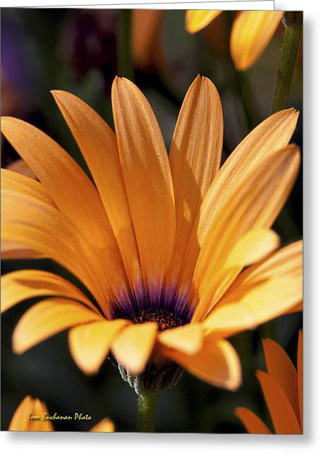 Orange Symphony Greeting Card