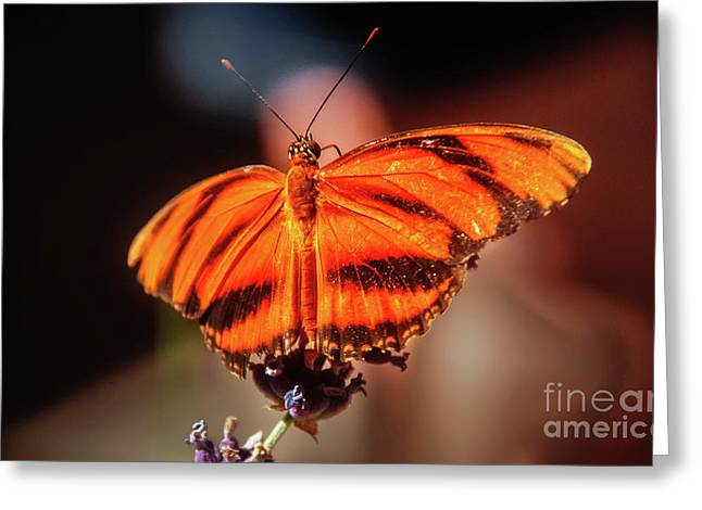 Orange Tiger Butterfly Greeting Card