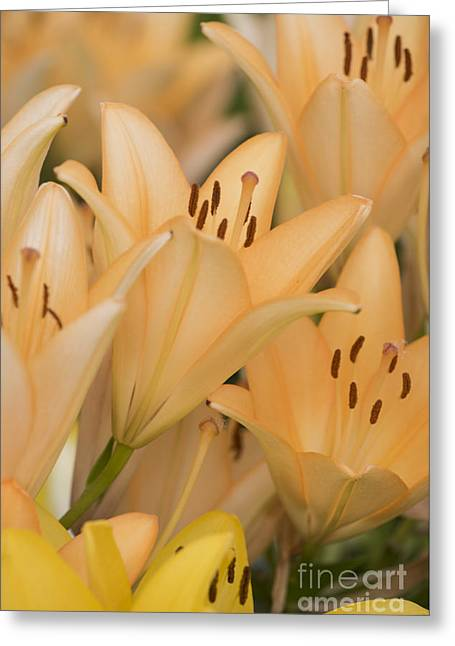 Orange Tiger Lillies Greeting Card