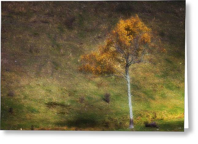 Greeting Card featuring the photograph Orange Tree by Ken Barrett
