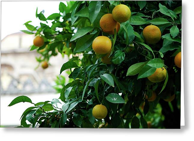 Greeting Card featuring the photograph Orange Tree by Lorraine Devon Wilke