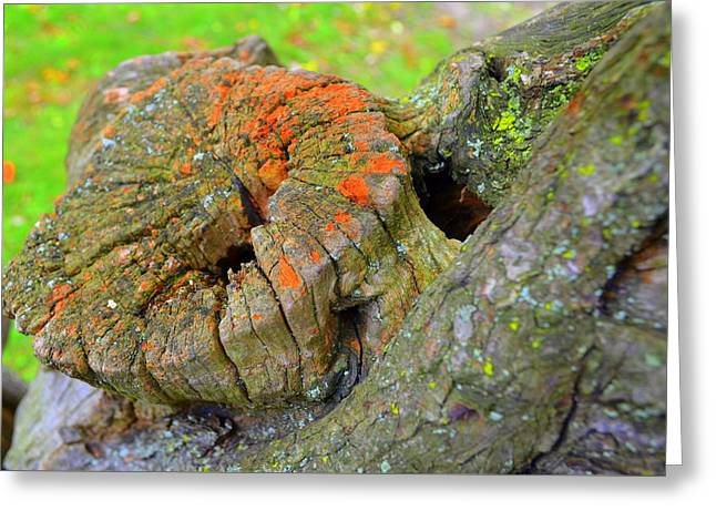Orange Tree Stump Greeting Card