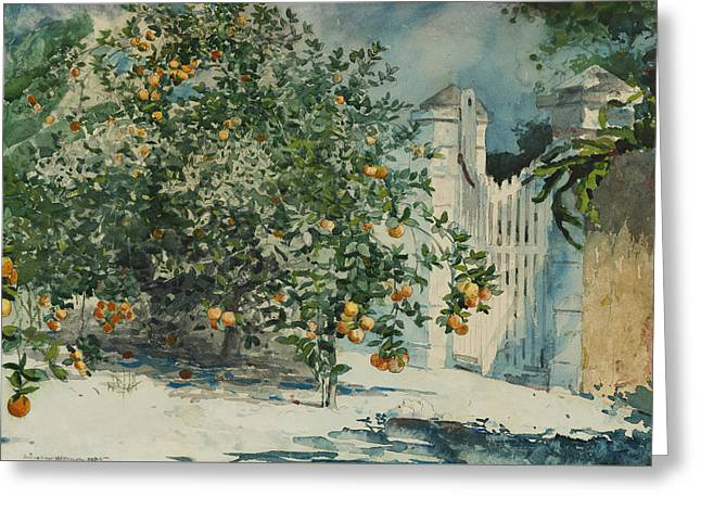 Orange Trees And Gate Greeting Card by Winslow Homer
