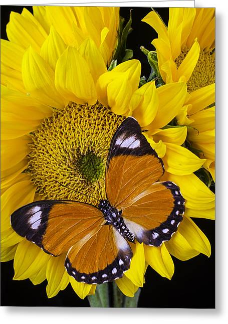 Orange White Tipped Butterfly Greeting Card