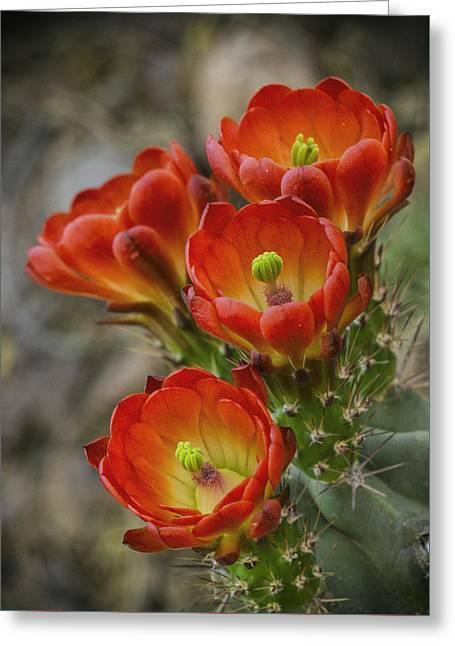 Orange Ya Beautiful  Greeting Card by Saija Lehtonen