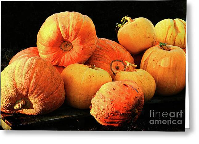 Orange Yellow Pumpkins Greeting Card