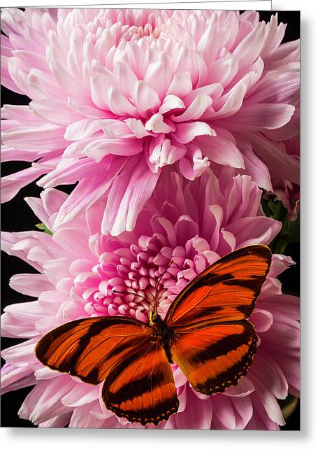 Oranges Wings On Pink Mum Greeting Card