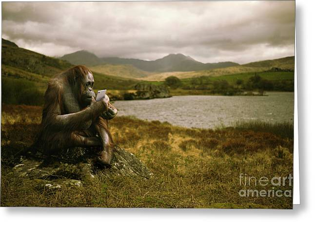 Orangutan With Smart Phone Greeting Card by Amanda Elwell
