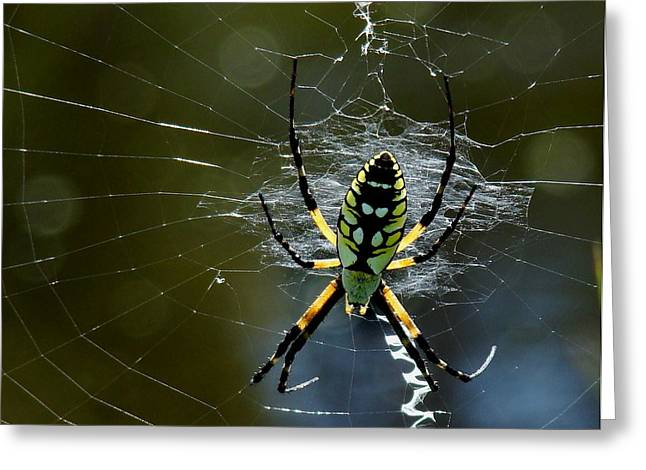 Orb-weaver 2 Greeting Card