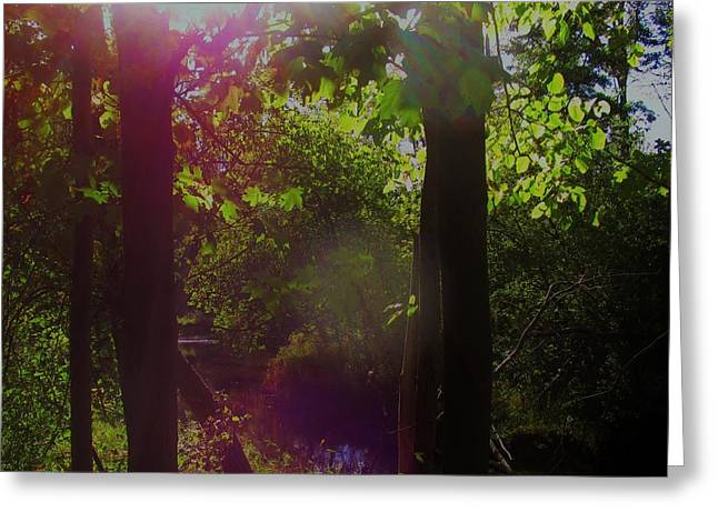 Orbs In The Forest Greeting Card