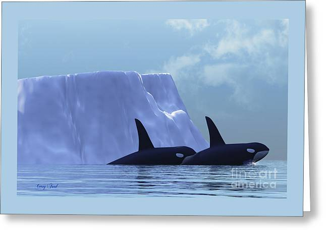 Orca Greeting Card by Corey Ford