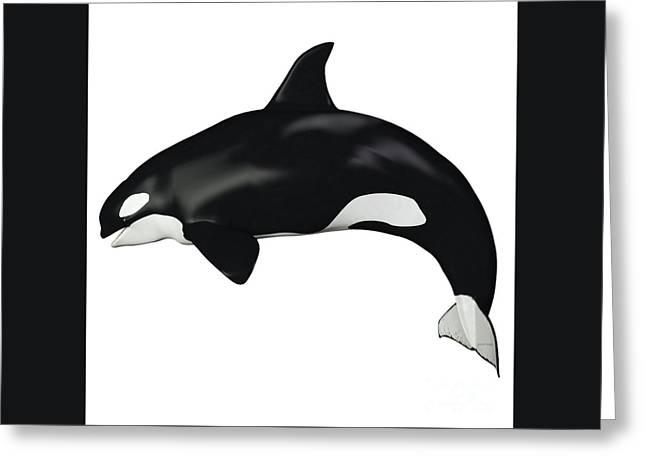 Orca Female Whale Greeting Card