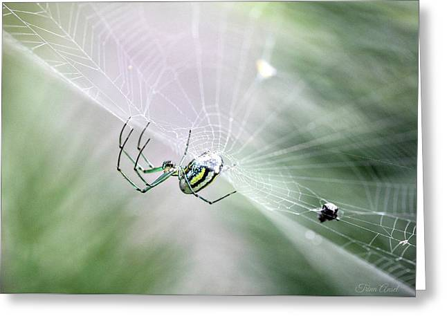 Greeting Card featuring the photograph Orchard Orbweaver Spider  by Trina Ansel