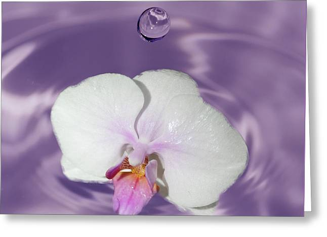 White Orchid Water Drop Greeting Card