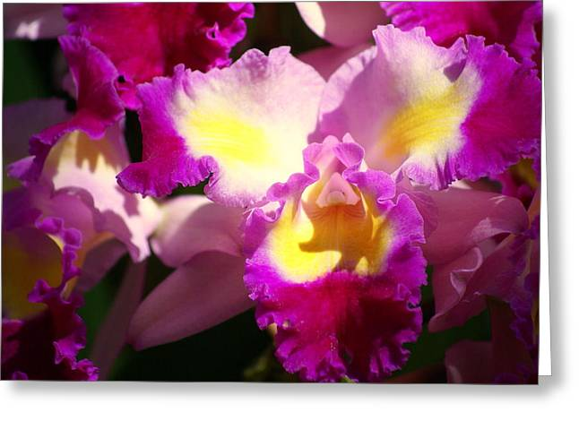 Orchid 1 Greeting Card by Marty Koch