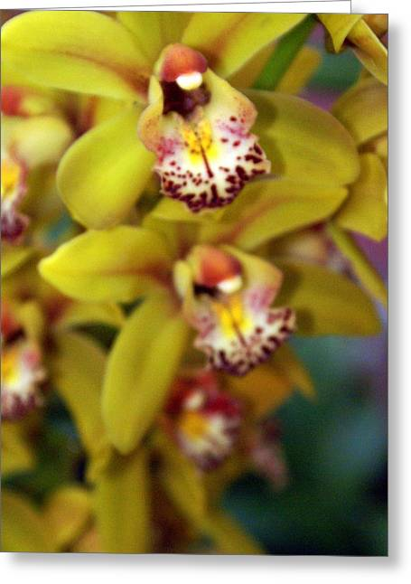 Orchid 11 Greeting Card by Marty Koch