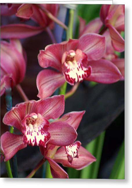 Orchid 14 Greeting Card by Marty Koch
