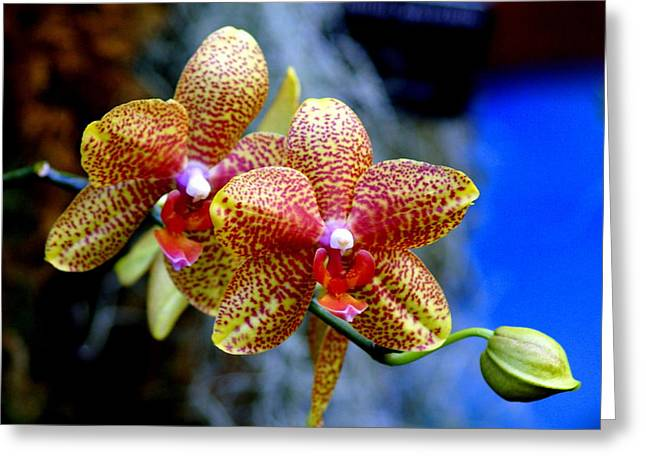 Orchid 17 Greeting Card by Marty Koch