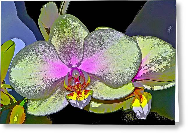 Pamela Cooper Greeting Cards - Orchid 2 Greeting Card by Pamela Cooper