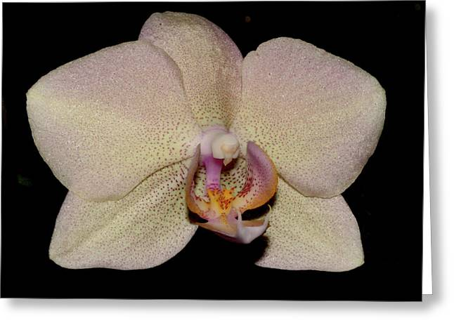 Orchid 2016 2 Greeting Card by Robert Morin
