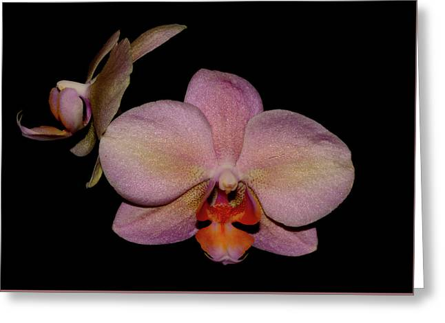 Orchid 2016 3 Greeting Card