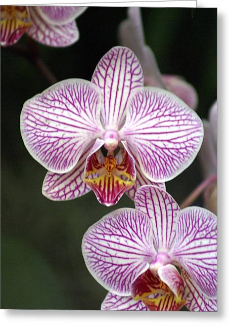 Orchid 22 Greeting Card by Marty Koch