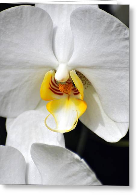 Orchid 23 Greeting Card by Marty Koch