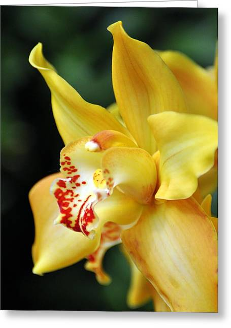 Orchid 24 Greeting Card by Marty Koch